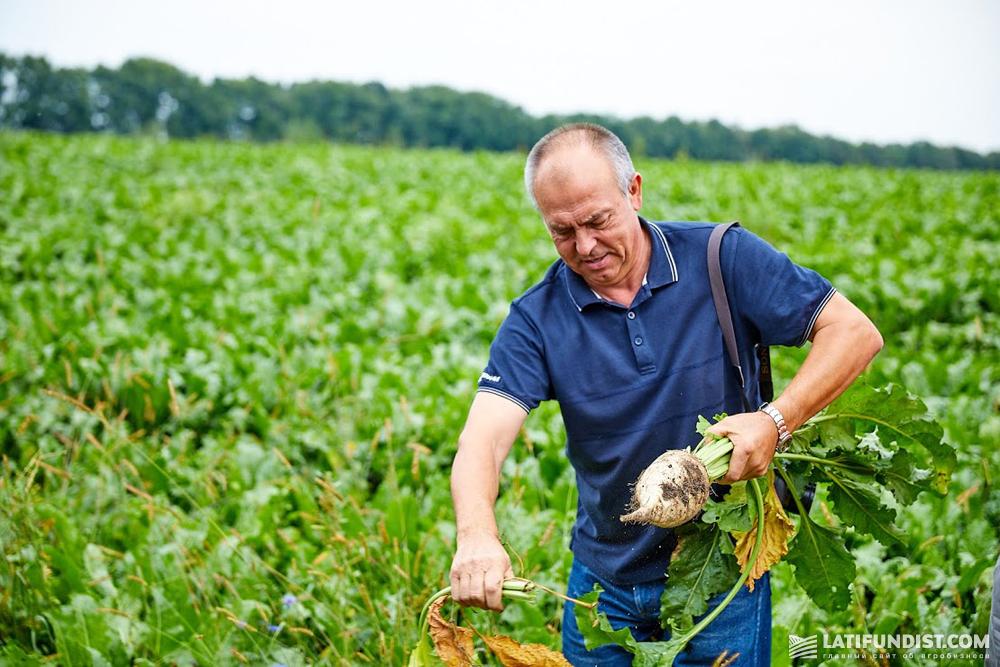 Василий Козий, специалист по семенам «Сесвандерхаве-Украина»