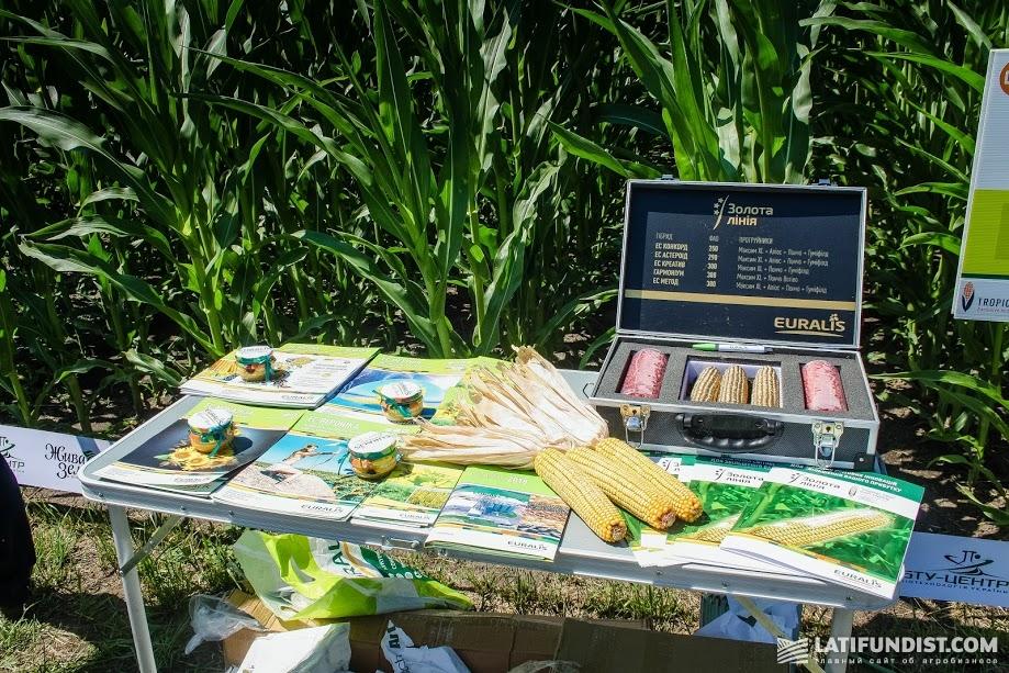 «Золотая» кукуруза. Её гибриды относятся к инновациям Tropical Dent