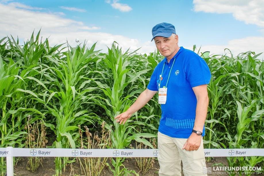 Игорь Тарушкин, руководитель отдела Регионального маркетинга компании Bayer Crop Science
