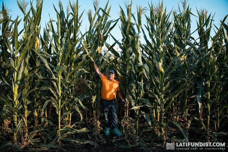 Чилийская тропическая кукуруза
