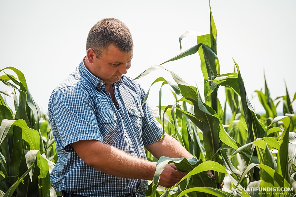 Владимир Семука показывает посевы кукурузы