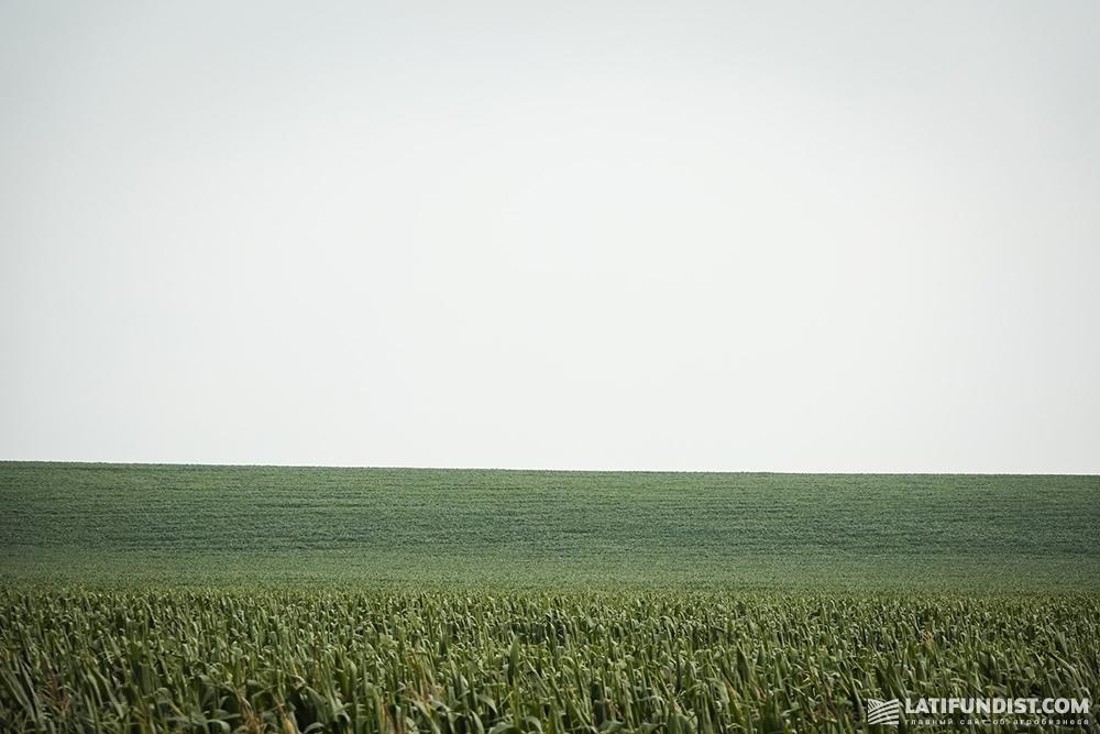 Кукурузное поле «Билагро»