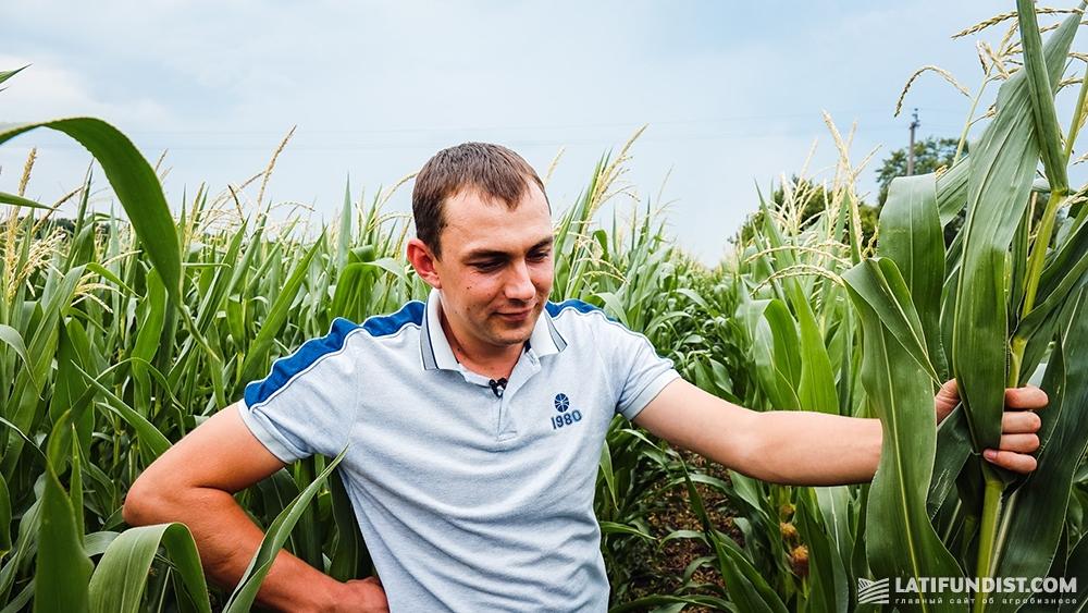 Роман Кордубан осматривает посевы кукурузы