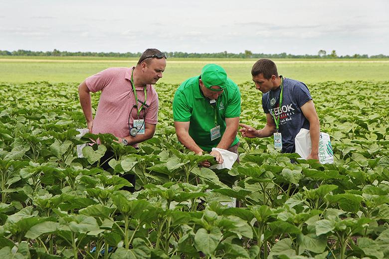 Агроном-консультант ALFA Smart Agro рассказывает о схемах защиты