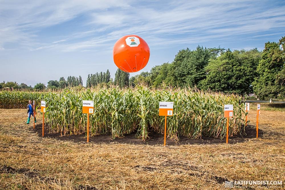 Демонстрационный участок кукурузы KWS