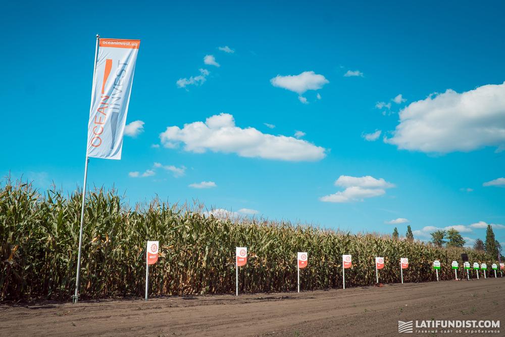 Демо-поля кукурузы