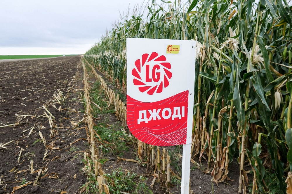 Силосная кукуруза Джоди