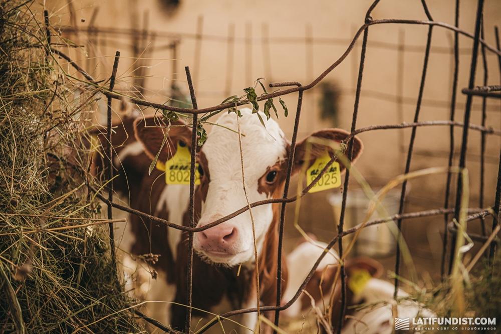 Всех животных тут кормят исключительно собственными кормами, покупают только подсолнечный жмых и необходимые для правильного обмена веществ животного добавки — соль, соду и мел