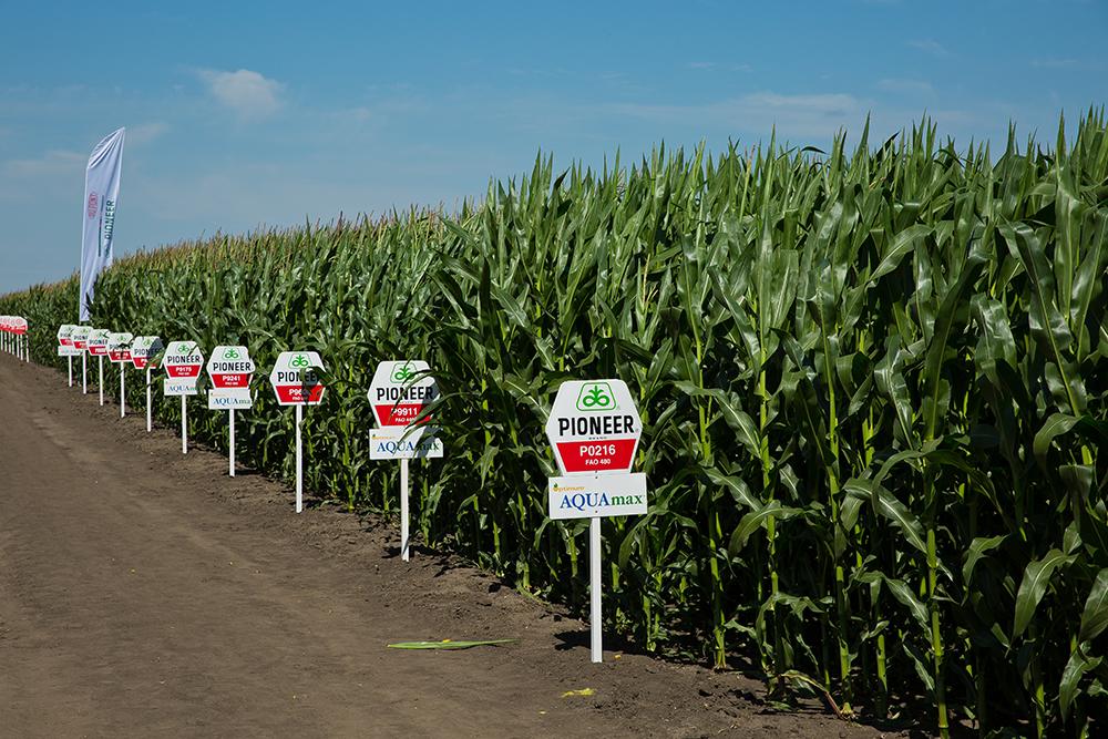 Демонстрационные участки кукурузы