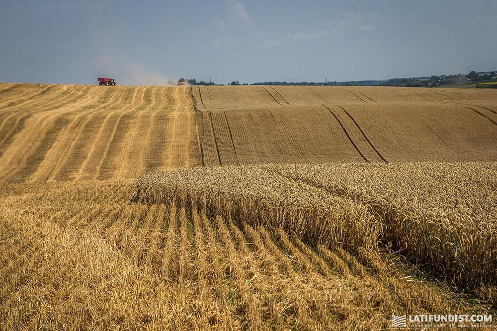 Пшеничное поле «Сварог Вест Груп»