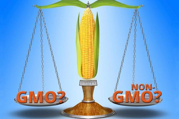 ГМО или не ГМО?