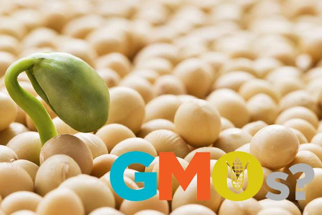 ГМО соя или не ГМО? Что лучше?