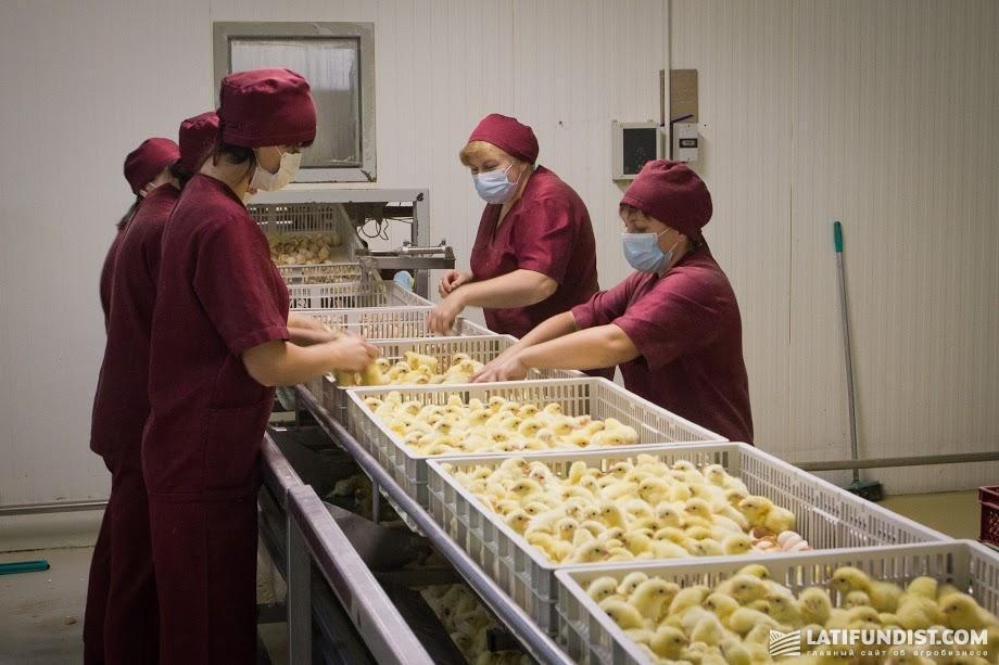 Работники птицефабрики МХП