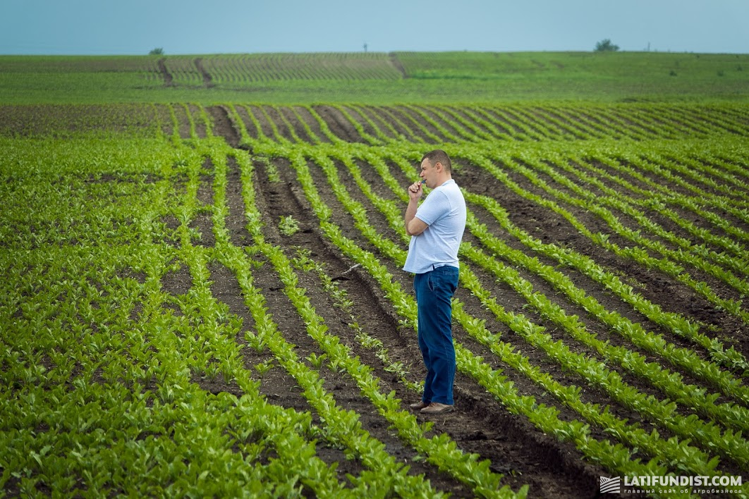 Вся связь ведется через смартфоны, агроном выезжает в поле только по необходимости