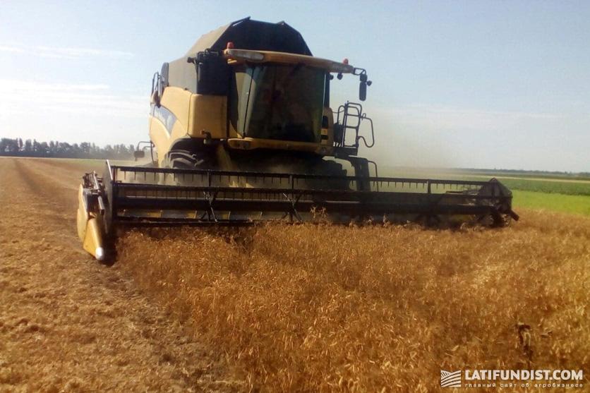 Сбор урожая гороха на Smart Field. Урожайность на тех участках, где применялся грунтовый гербицид Оскар Премиум®, на 5 ц/га выше