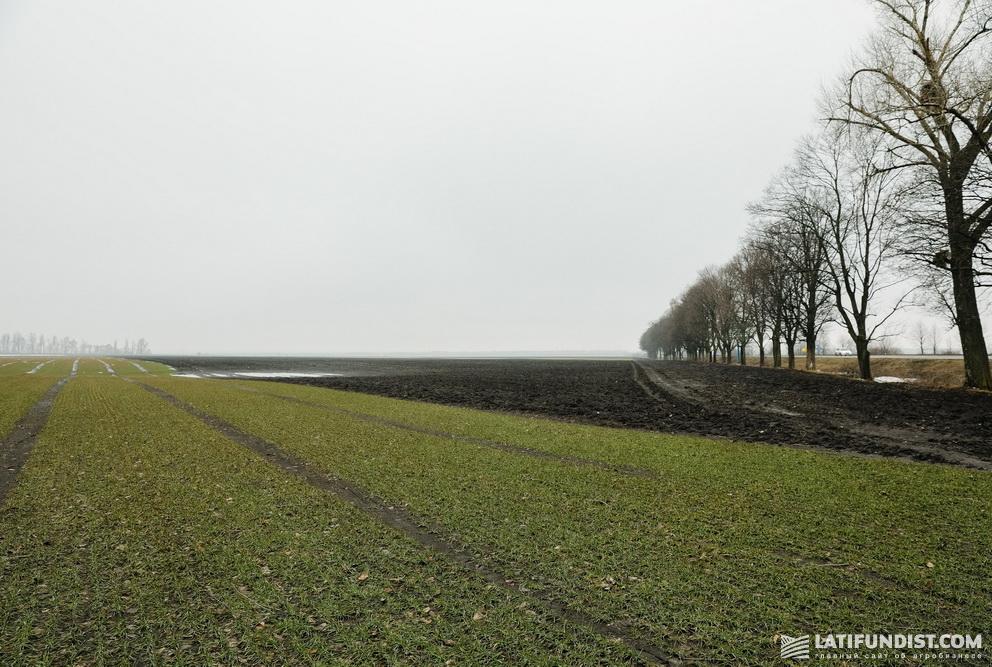 Это снимок сделан 29 марта 2018 года. Так на Smart Field выглядели участки озимой пшеницы