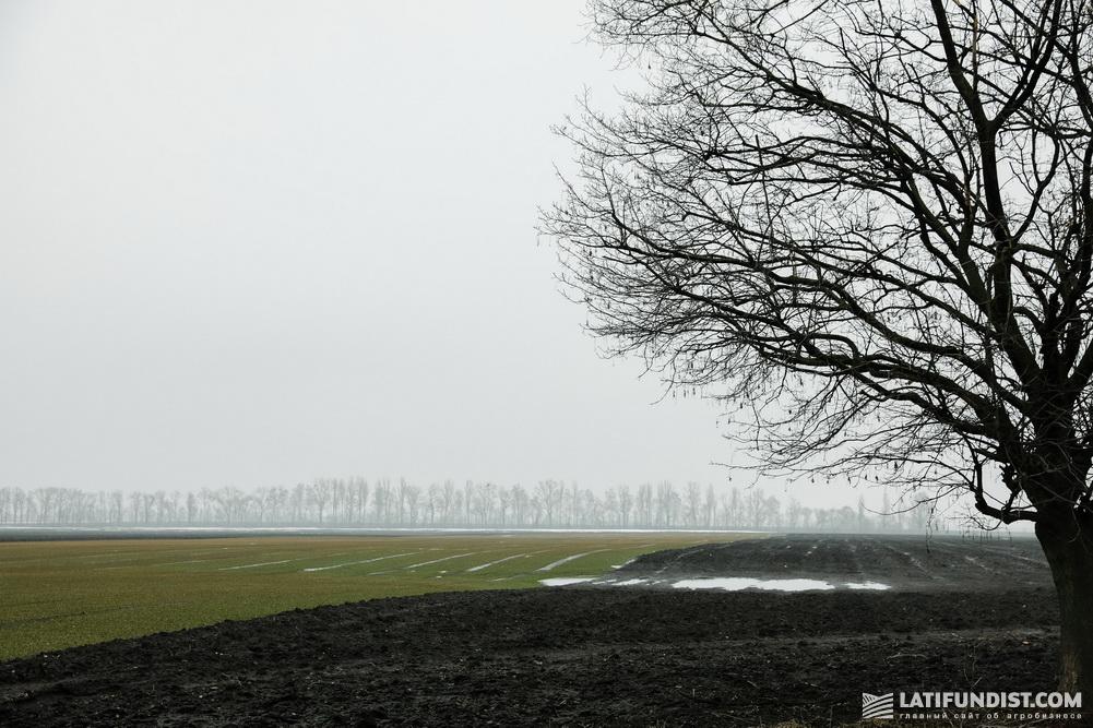 29 марта — на Smart Field сходит вода. Хотя часть участка озимой пшеницы все еще под «блюдцем»