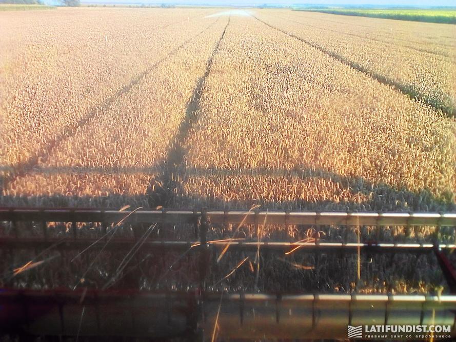14 августа — уборка озимой пшеницы на Smart Field