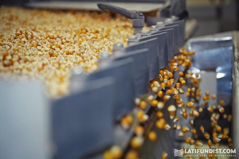 Производство семян кукурузы
