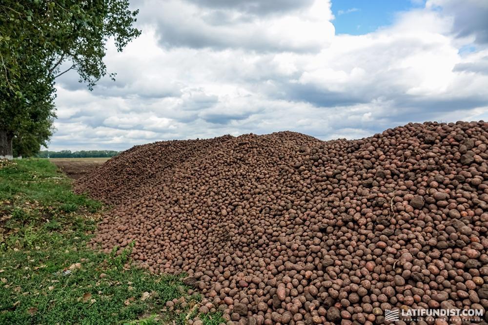 Картофель «Биотех ЛТД»