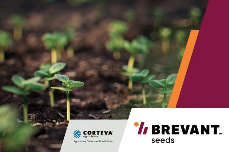 Семена Brevant