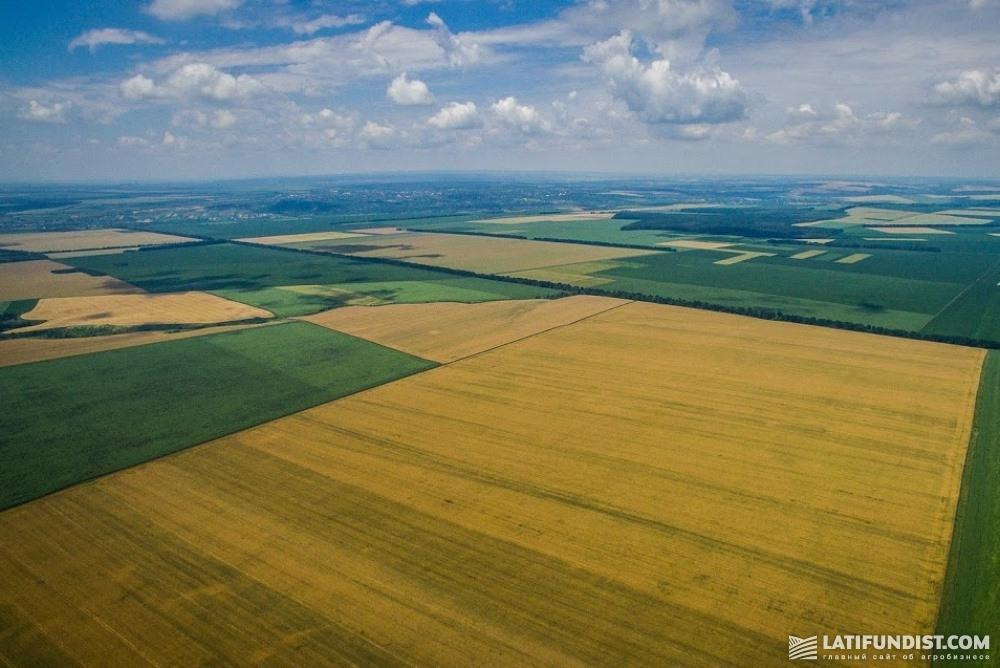 Поля компании «Мрия», которая входит в структуру агрохолдинга «НИБУЛОН»