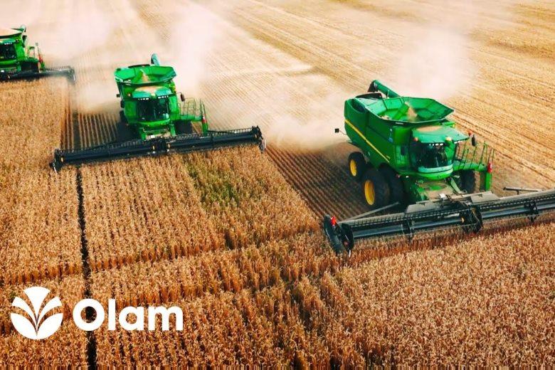 Сегодня OLAM экспортирует пшеницу, кукурузу, ячмень, сорго, рожь, льняное семя, нут и шрот