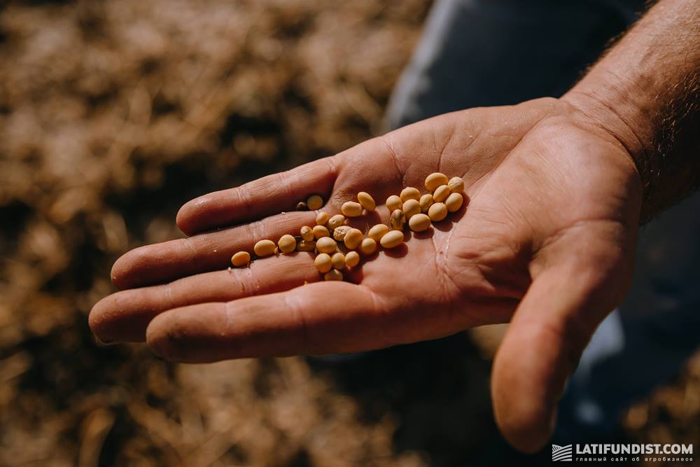 Соя агрохолдинга A.G.R. Group