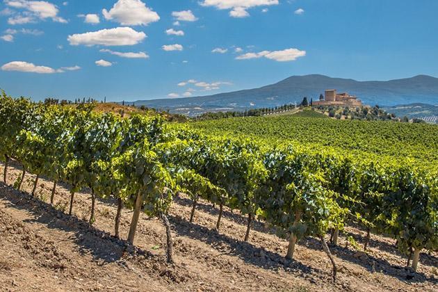 Французские виноградники