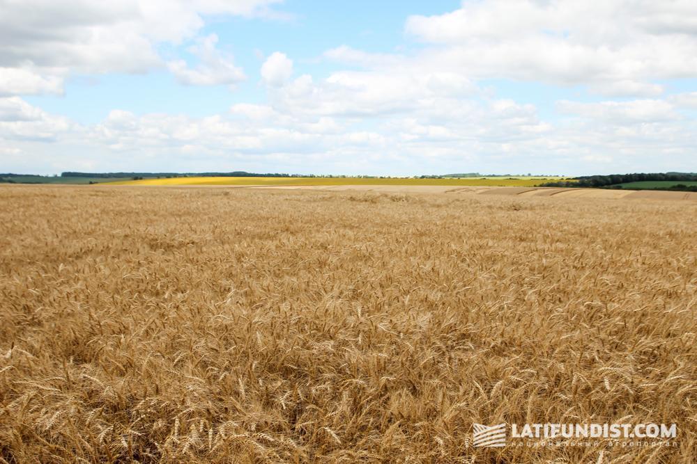 Украинские поля