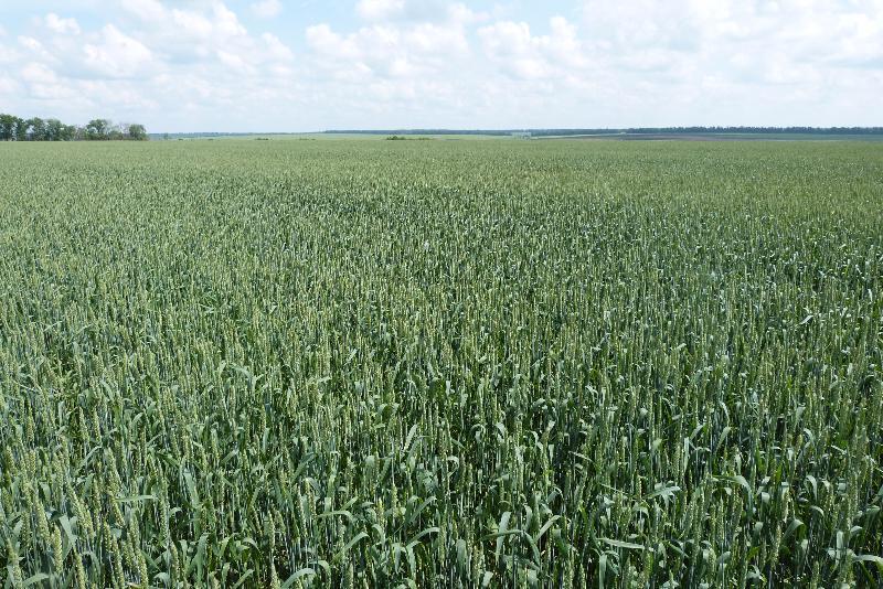 На полях группы компаний Trigon Agri