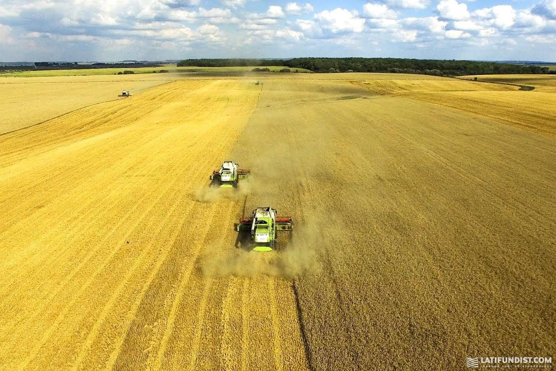 Активы агрохолдинга «Мрия» хочет купить международная инвестиционная компания Continental Farmers Group