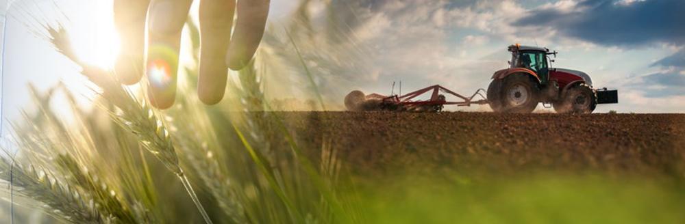 Зерновой сегмент
