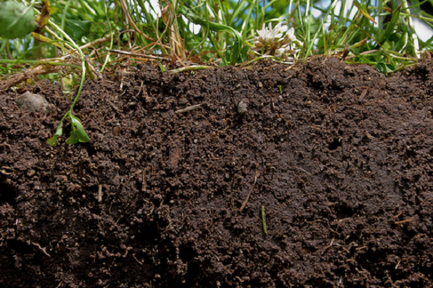 Здоровая почва
