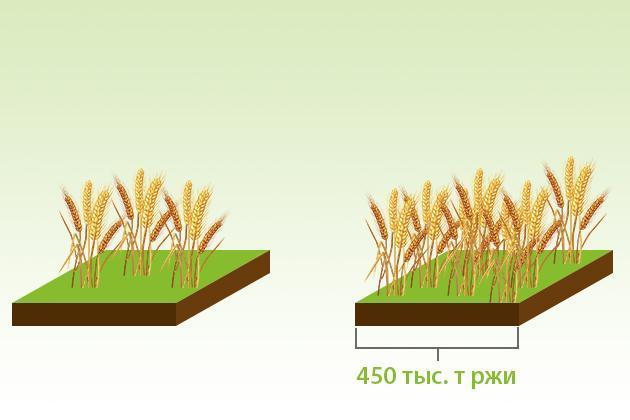 Для внутренних нужд Украине требуется около 450 тыс. т ржи