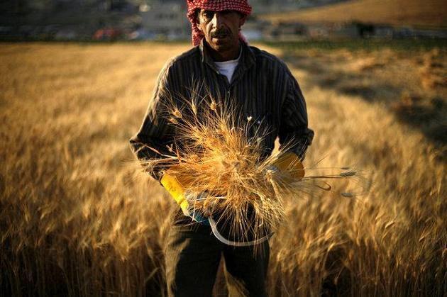Сирийский фермер
