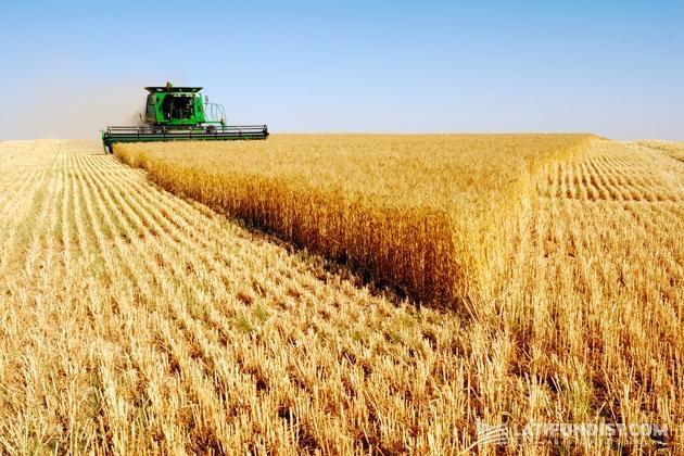 Рекордный урожай и экспорт