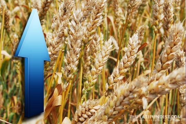 Восстановление мировых цен на зерновые