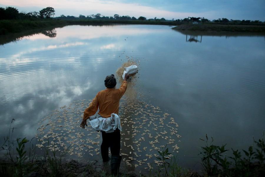 Подкормка рыбы