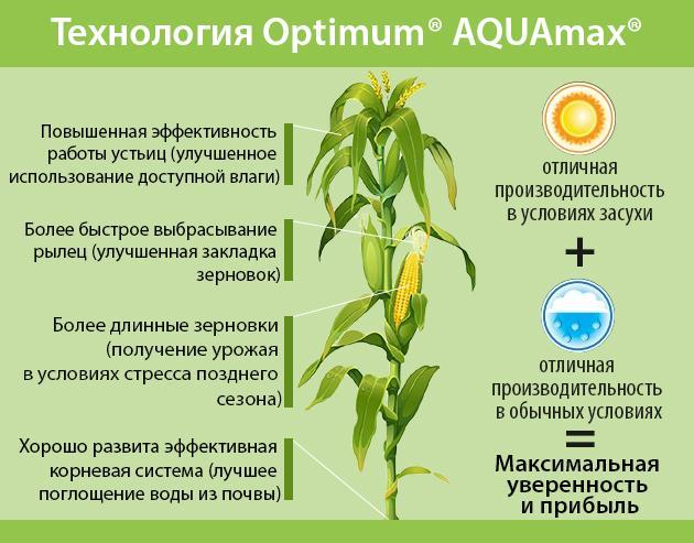 Гибрид P9241 Optimum® AQUAmax®