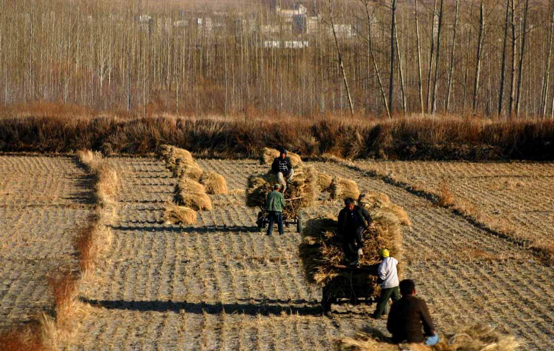 Сбор урожая в Китае