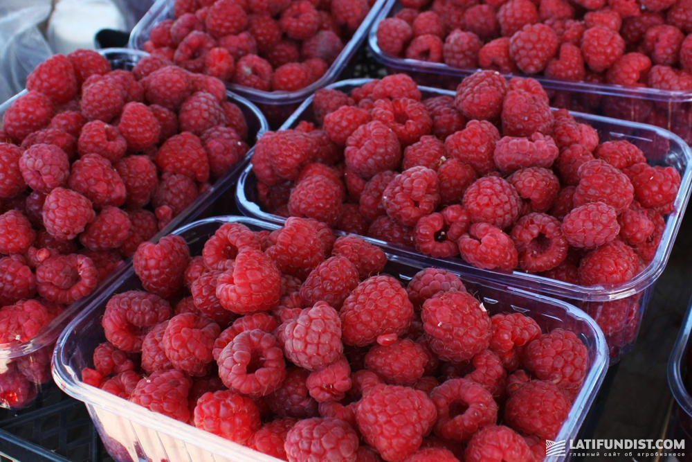 This summer Serbian and Polish farmers even blocked some highways demanding to limit the import of cheap Ukrainian raspberries