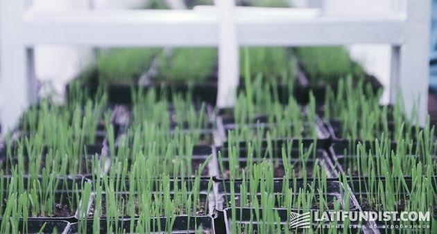 Взгляд изнутри: Производство средств защиты растенийALFA Smart Agro
