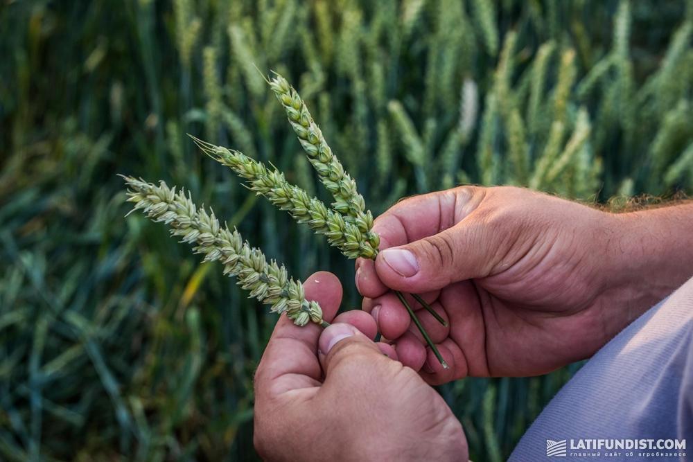 На пороге у аграриев новый сезон, успешность которого зависит не только от правильно подобраных культур, семян, СЗР и техники, но и от грамотного управления финансами